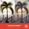 Free-Lightroom-Preset-Palm