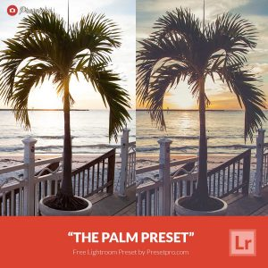 Free-Lightroom-Preset-Palm