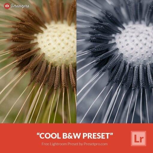 Free-Lightroom-Preset-Cool-B&W