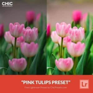 Free-Lightroom-Preset-Pink-Tulips