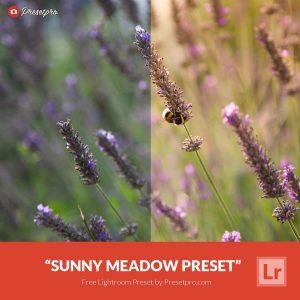 Free-Lightroom-Preset-Sunny-Meadow