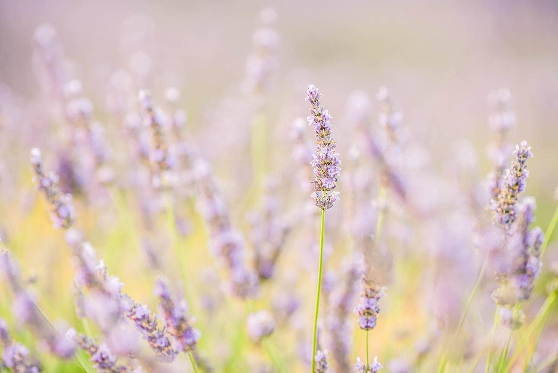 free-chic-preset-lavender-fields
