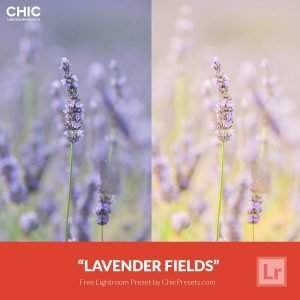 free-lightroom-preset-lavender-fields