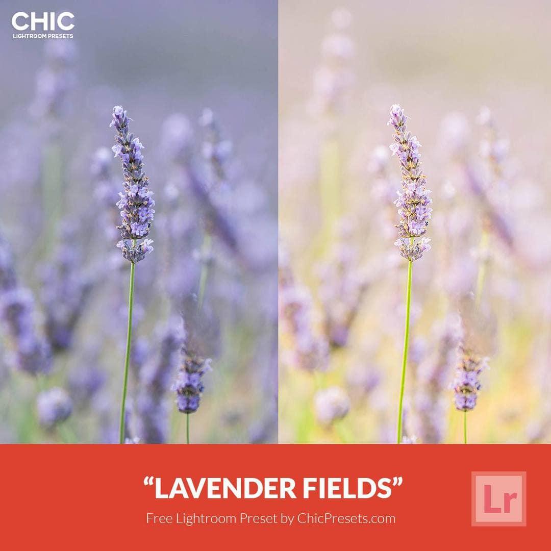 Free Lightroom Preset Lavender Fields - Download Now!
