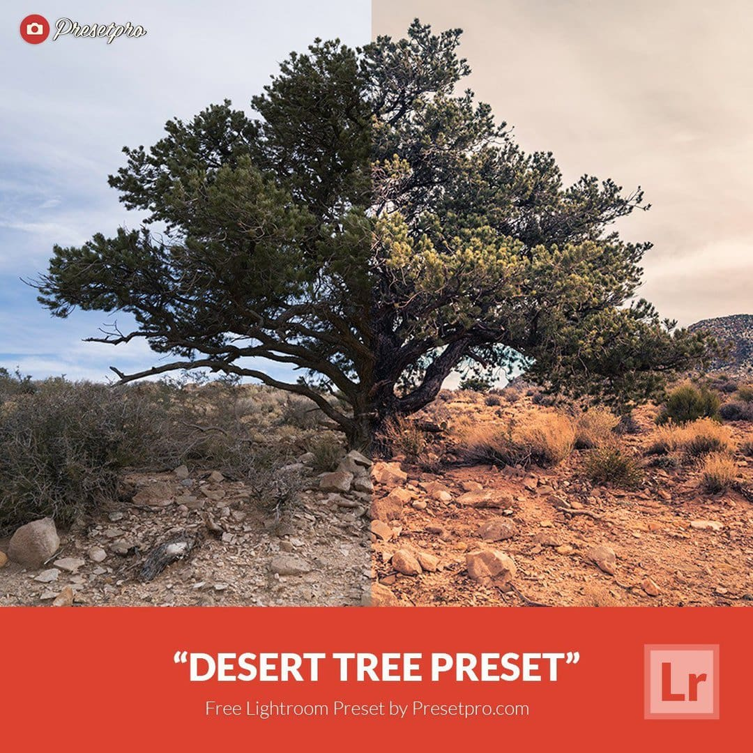 free-lightroom-preset-desert-tree