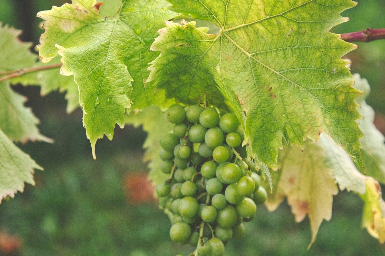 Free-Luminar-Preset-Grape-Vine-After