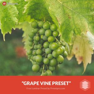 Free-Luminar-Preset-Grape-Vine-FreePresets.com