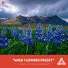 Free-Aurora-HDR-Preset-Wild-Flowers-Presetpro