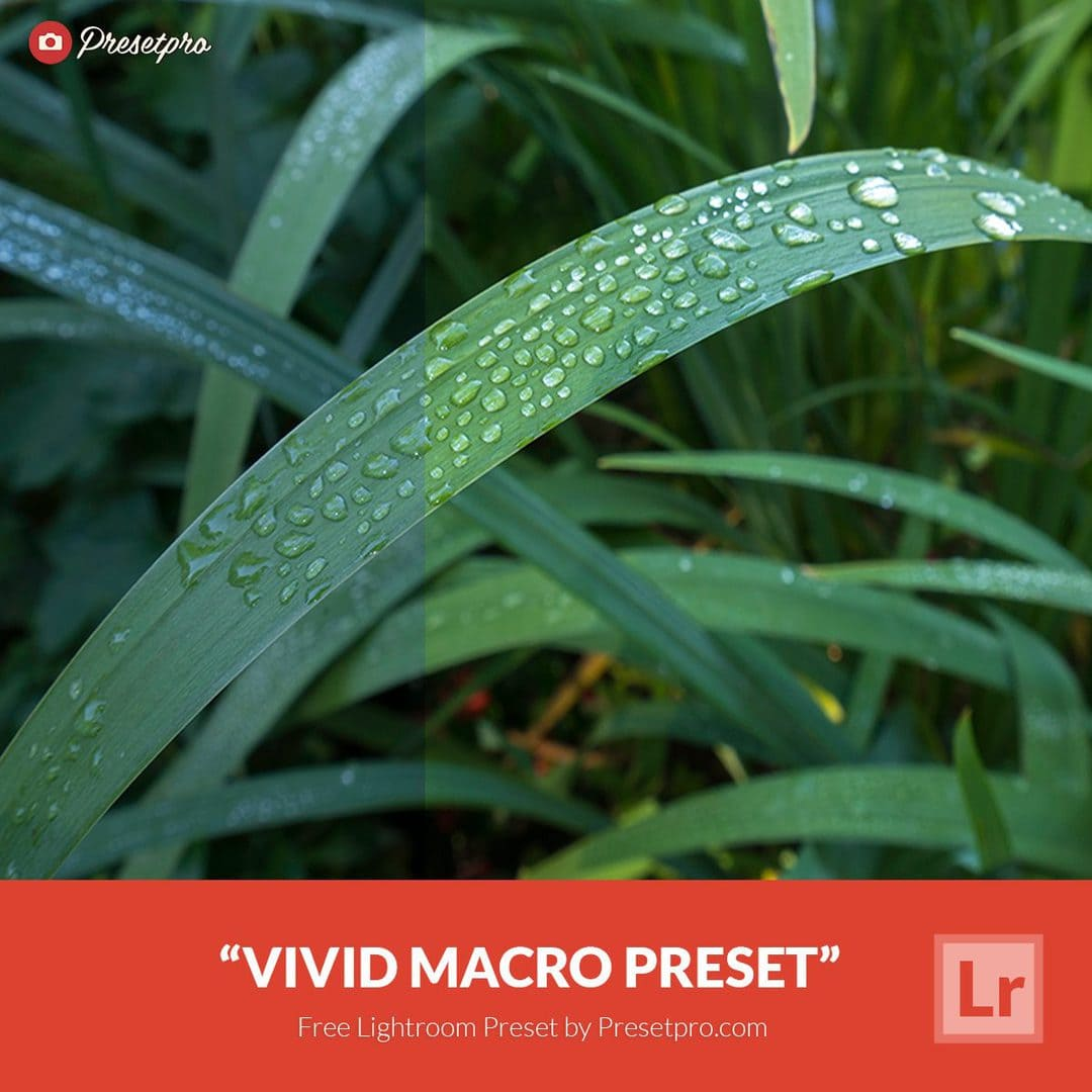 Free-Lightroom-Preset-Vivid-Macro-Presetpro