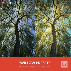 Free-Lightroom-Preset-Willow
