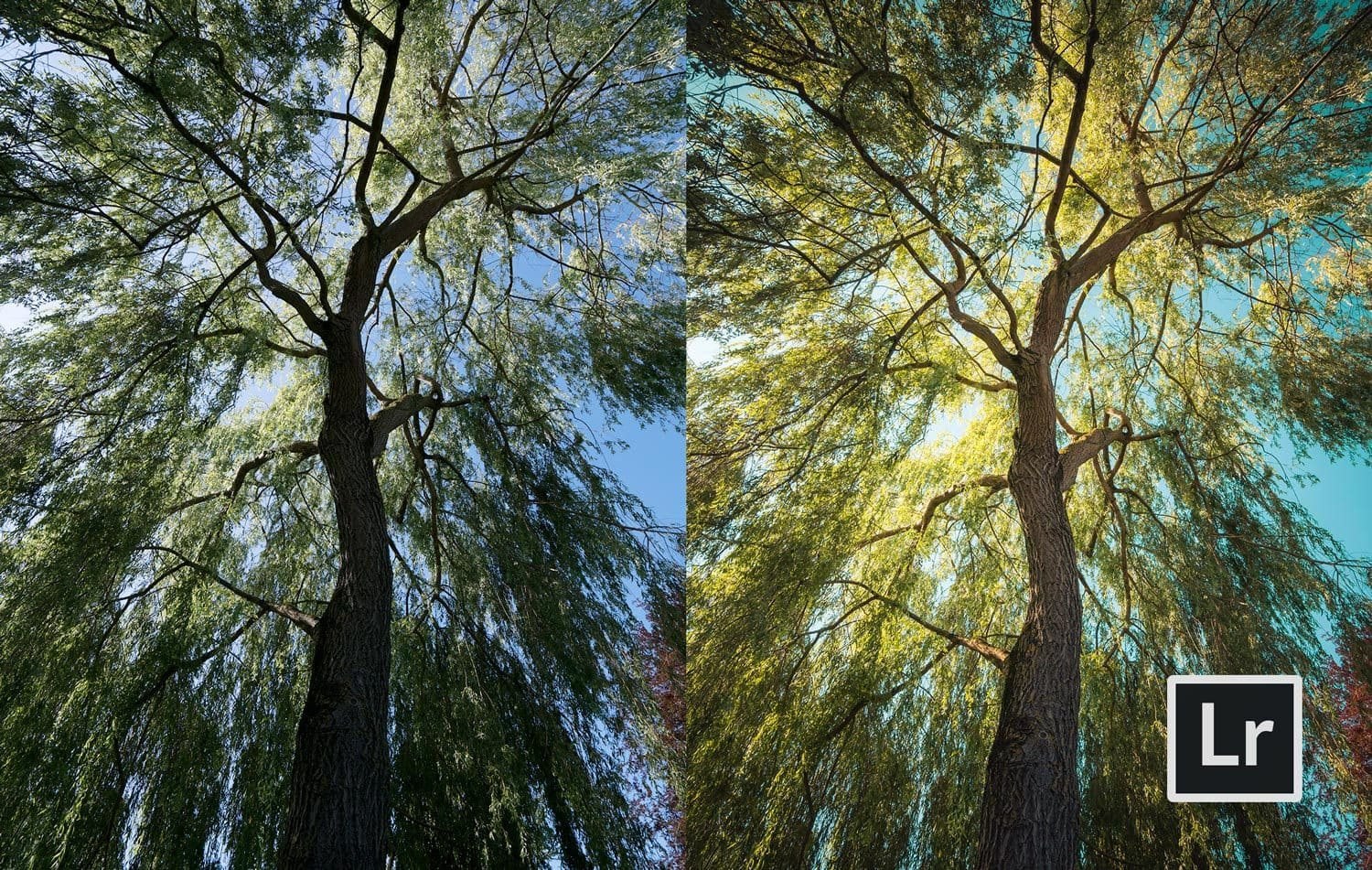 Free Lightroom Preset Willow