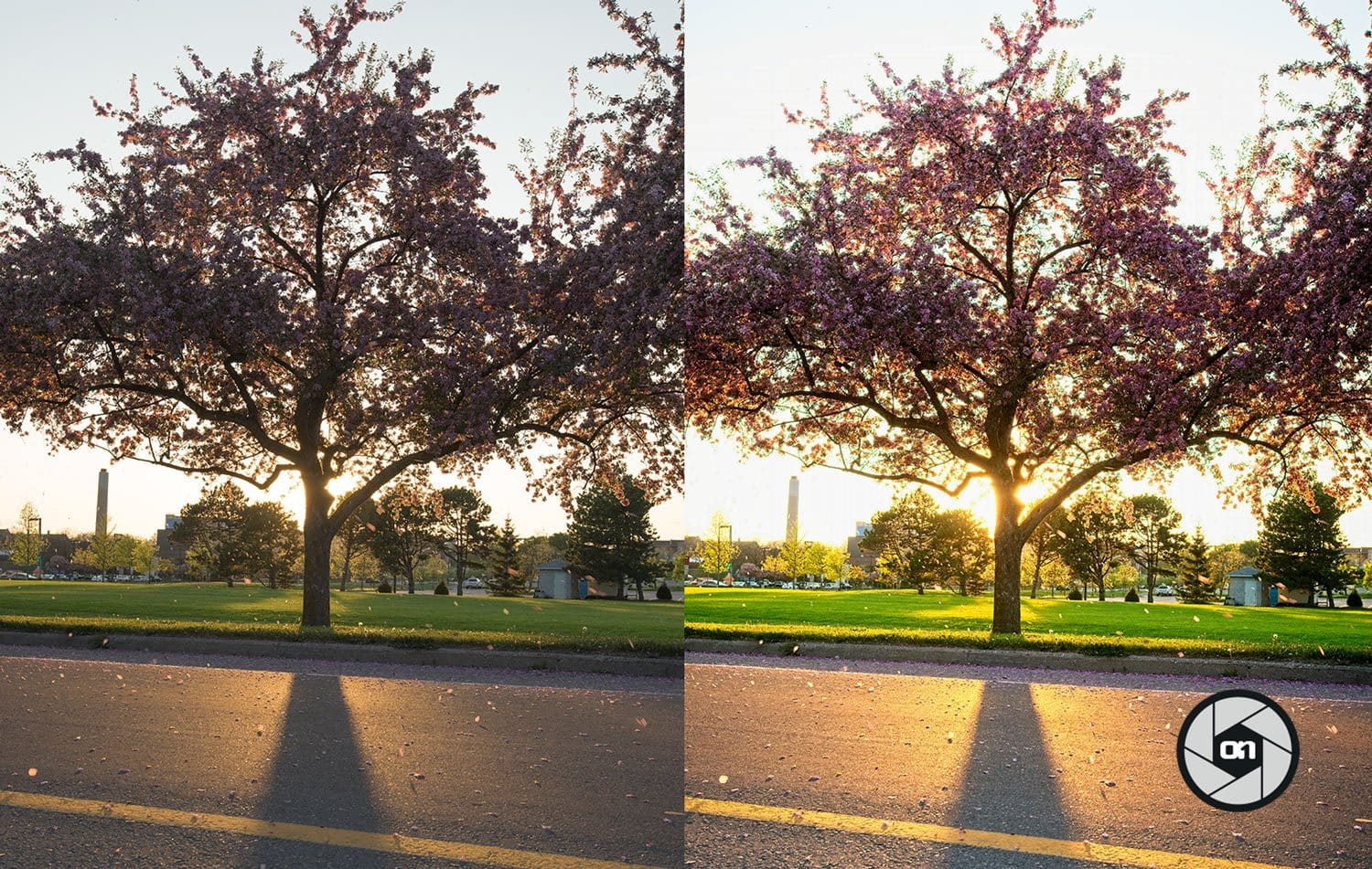 Free-On1-Preset-Bright-Sun-Before-and-After
