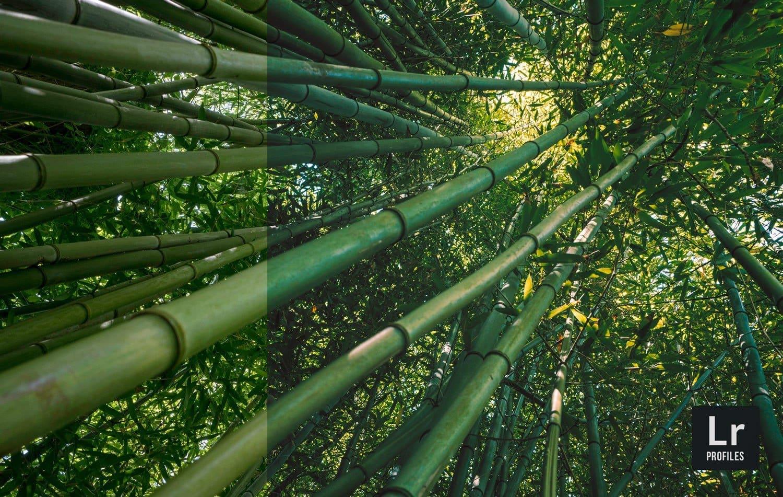 Free-Lightroom-Profile-Fuji Film-Before-After-Presetpro.com