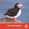 Free-Lightroom-Profile-Soft-Fade-Presetpro.com