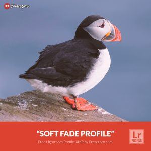 Free-Lightroom-Profile-Soft-Fade-Presetpro.com