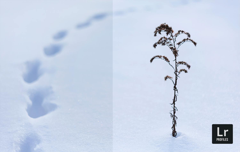 Free-Lightroom-Snow-Blind-Before-After-Presetpro.com
