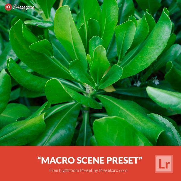 Free-Lightroom-Preset-Macro-Scene-Presetpro.com
