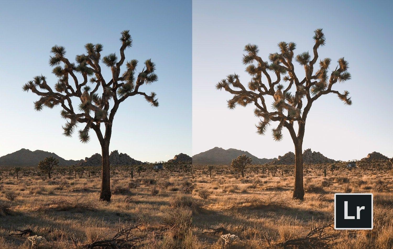 Free-Lightroom-Preset-Joshua-Tree-Before-and-After-Presetpro.com