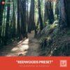 Free-Lightroom-Preset-Redwoods-Presetpro.com