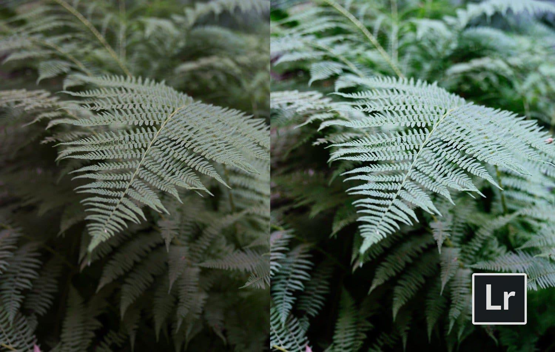 Free-Lightroom-Preset-Foliage-Before-and-After-Presetpro.com