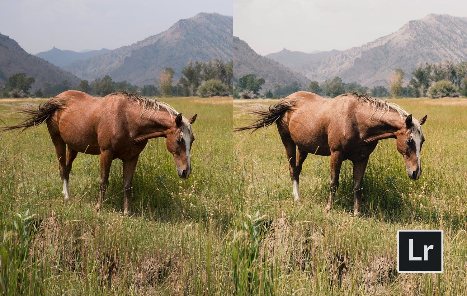 Free-Lightroom-Preset-Rerto-Look-Before-and-After