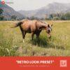 Free-Lightroom-Preset-Retro-Look-Presetpro.com