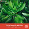 Free-Lightroom-Preset-Banana-Leaf-Preset-Presetpro.com