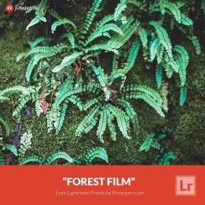 Free-Lightroom-Preset-Forest-Film-Presetpro.com