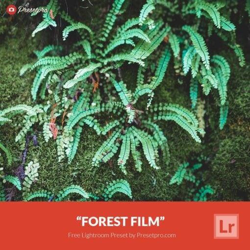 Free-Lightroom-Preset-Forest-Film-Presetpro.com