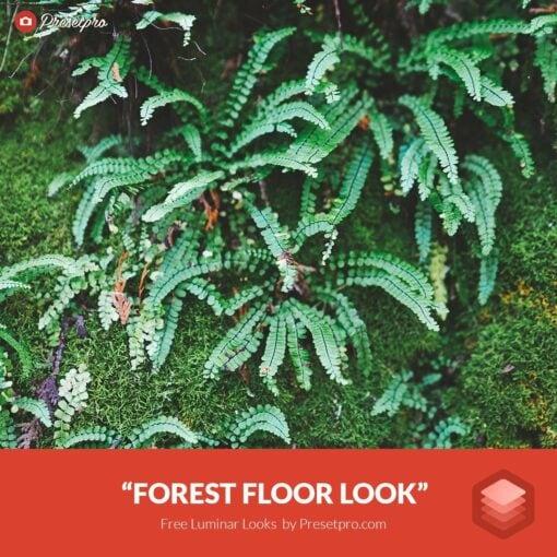 Free-Luminar-Look-Forest-Floor-Preset-Presetpro.com