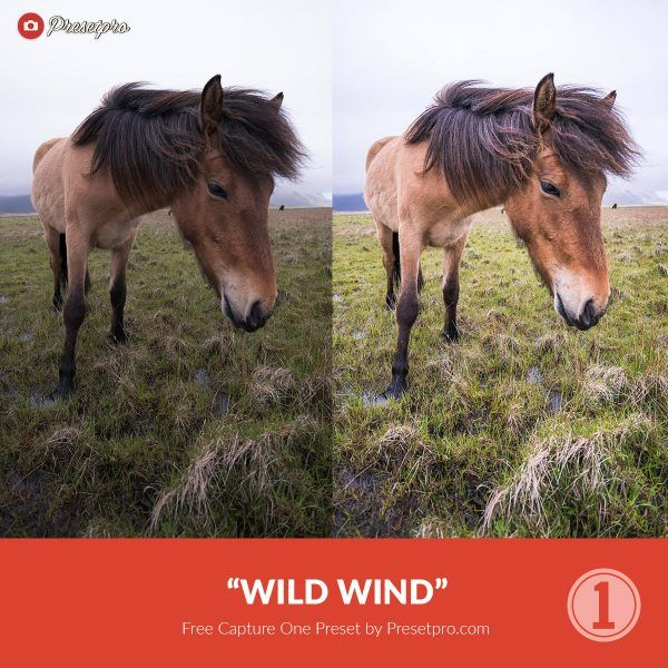 Free-Capture-One-Preset-Style-Wild-Wind-Presetpro.com