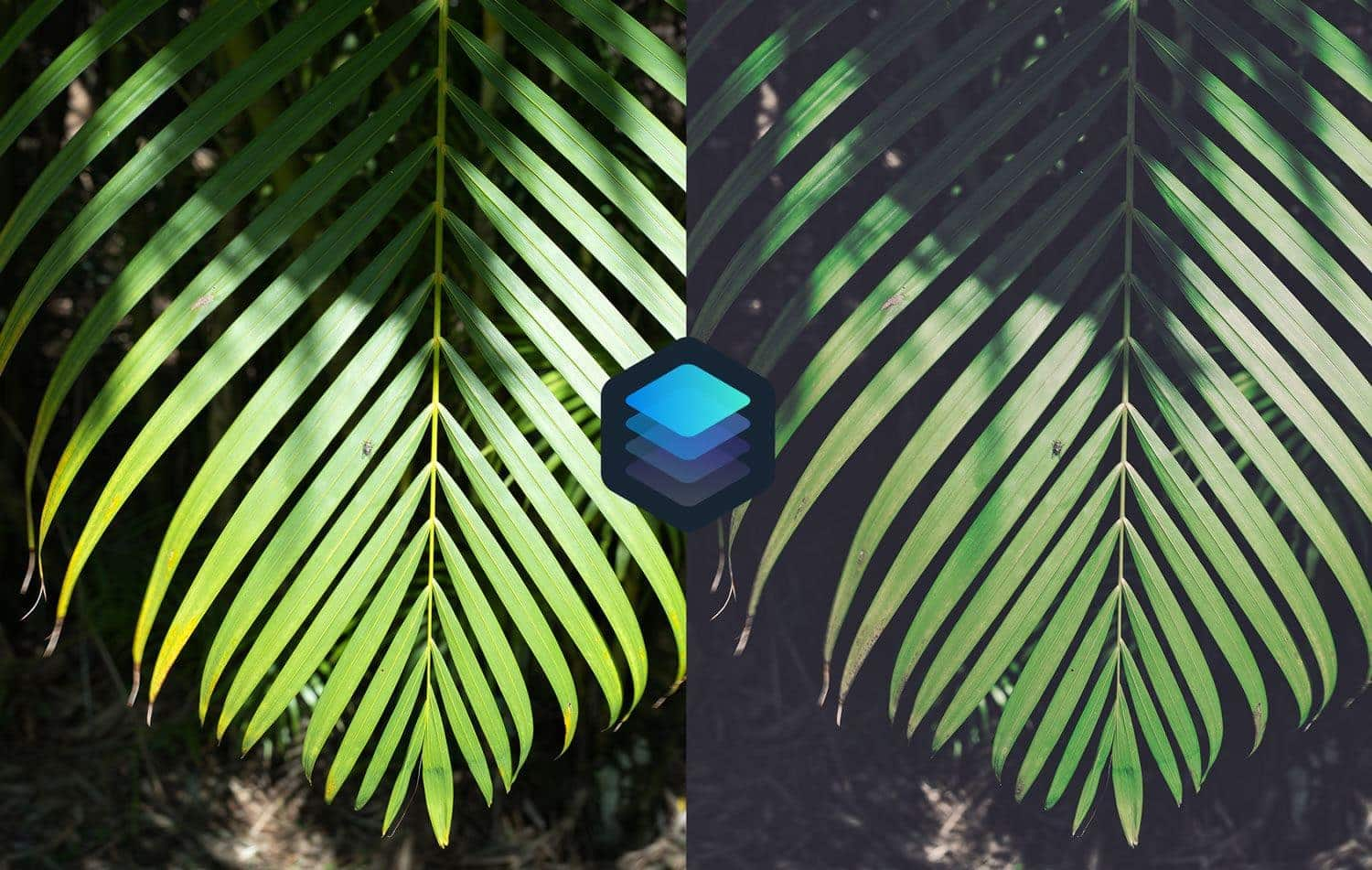 Free-Luminar-Look-Foliage-Preset-Before-and-After-Presetpro