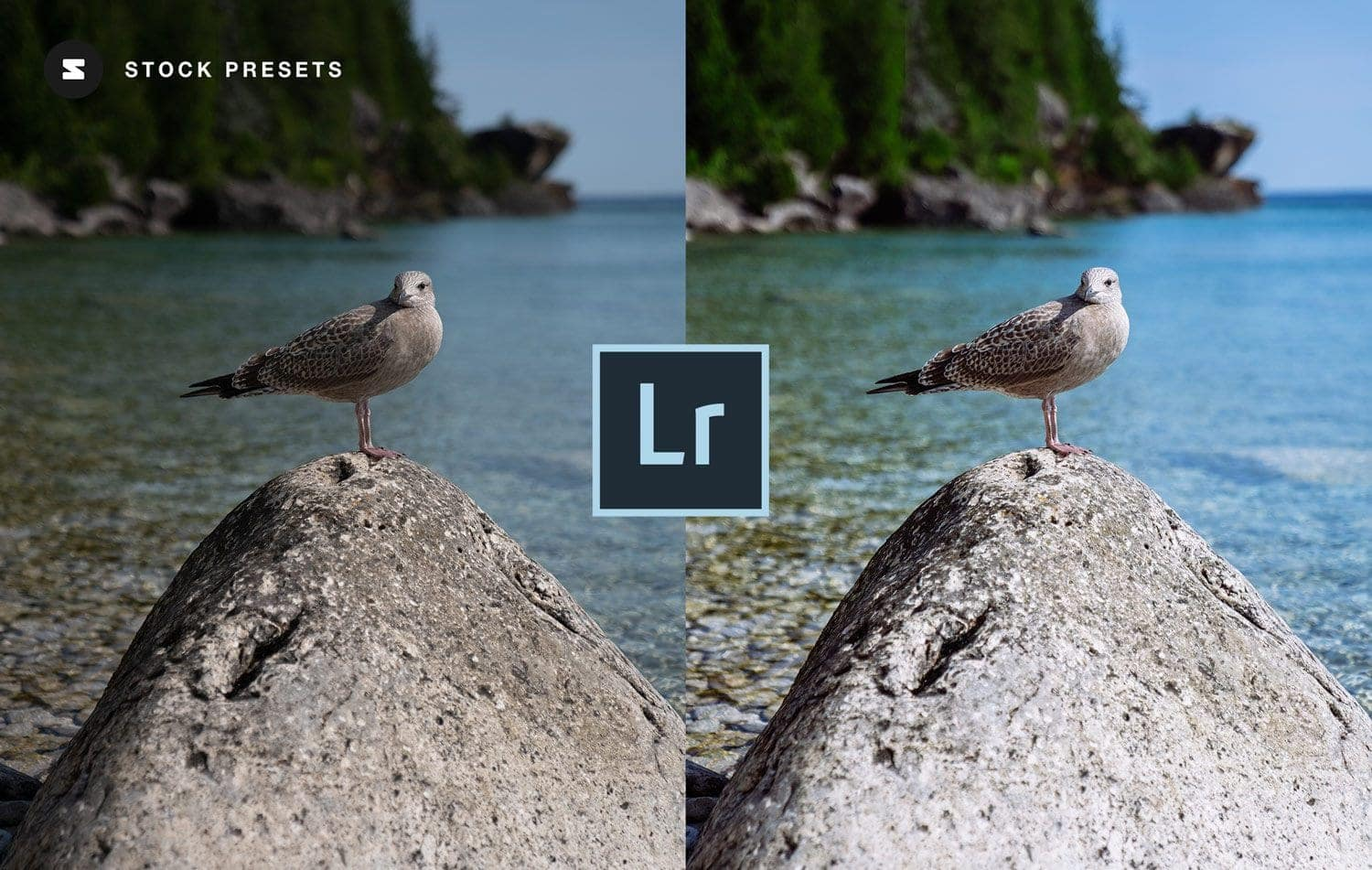 Free-Lightroom-Preset-and-Profile-Scenic-Color-Before-and-After-Stockpresets.com