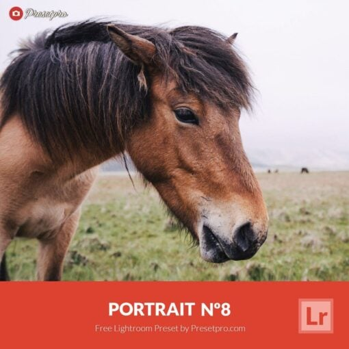 Free-Lightroom-Preset-and-Profile-Portrait-Number-8-Presetpro
