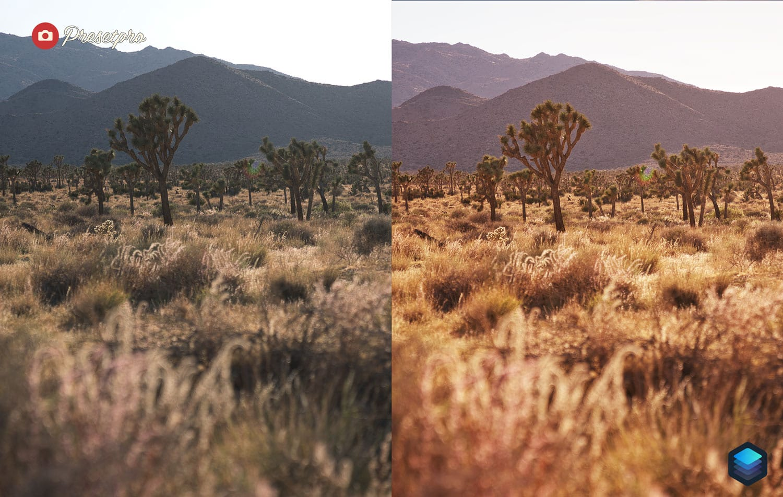 Free-Luminar-Look-Warm-Light-Preset-Before-and-After-Presetpro.com