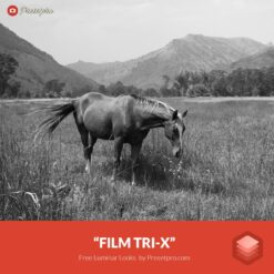 Free Luminar Look | Film Tri-X