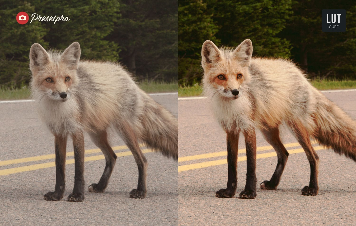 Free-LUTs-Vintage-Fox-Look-up-Table-Before-and-After-Presetpro