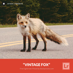 Free-Lightroom-Preset-Vintage-Fox-Stockpresets